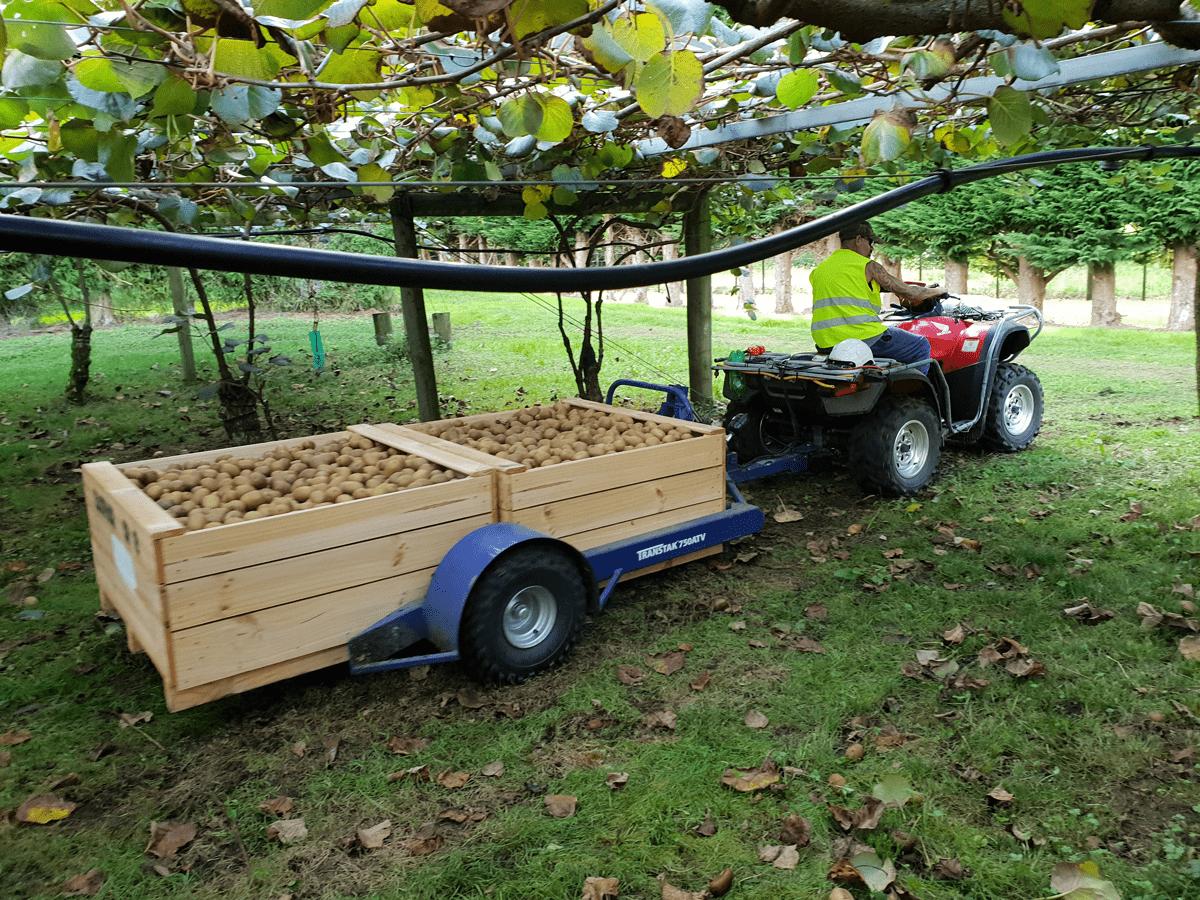Transtak 750 ATV Operating with Kiwifruit
